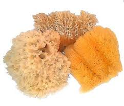 Faux Painting Choosing The Right Sea Sponge For Faux Painting Wool Grass Or
