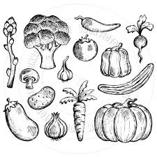 drawn vegetables simple pencil and in color drawn vegetables simple