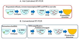 bureau de la pcr cell direct pcr aimed at specific cell detection intechopen