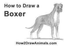 boxer dog howling to draw a boxer dog