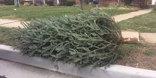 baltimore county christmas tree collection starts jan 9 towson