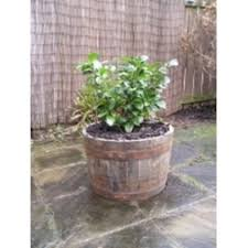 Half Barrel Planters by Small Oak Tubs Half Barrel Planters