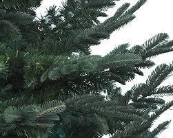 harrow s melville ny trees