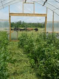 Tomatoes Trellis Our Favorite Way To Trellis Lots Of Tomatoes Finn Meadows Farm