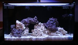 Tank Aquascape The Use Of Negative Space In The Reef Aquarium Aquascape