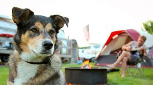 Gadgets For Pets 5 Cool Summer Gadgets For Dogs