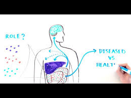 Why Is Anatomy And Physiology Important You May Not Know About One Of The Most Important Organs In Your Body