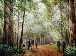 California Forest images A california startup is using ashes to protect forests jpg