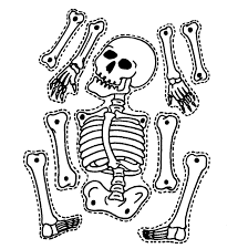 jointed skelton simple anatomy lesson or halloween craft