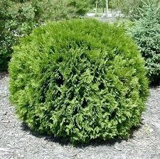 Garden Shrubs Ideas Low Maintenance Landscaping Shrubs Best Low Maintenance Shrubs