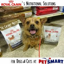 brand spotlight royalcanin u0027s nutritional solutions for dogs