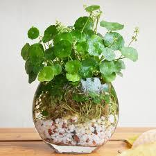 copper plant pot reviews online shopping copper plant pot
