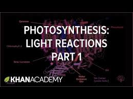 photosynthesis overview of the light dependent reactions video