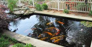 Patio Pond outdoor and patio creating more amazing backyard by the existence
