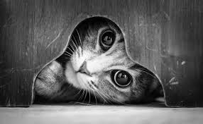 Black And White Photography The Mysterious Lives Of Cats Captured In Black And White
