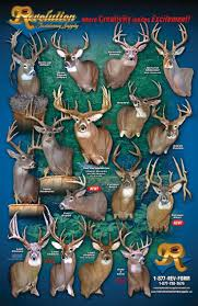 135 best taxidermy images on pinterest deer mounts deer hunting after the hunt infographic