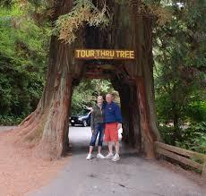 Chandelier Tree Address August 25 U2013 California U0027s Coastal Humboldt Redwoods U0027n