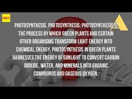 what type of energy is light what type of energy do plants convert light energy into youtube
