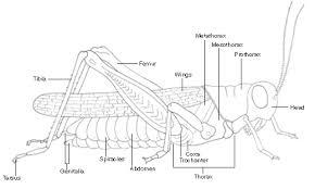 concept design home grasshopper carapace pictures