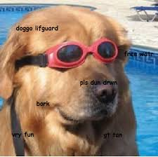 Dog With Glasses Meme - new doggo meme should sell or wait memeeconomy