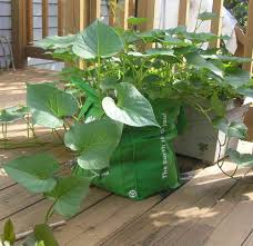 urban garden casual grocery bag gardening