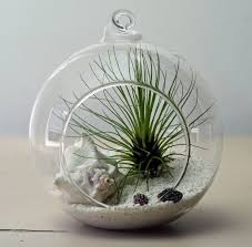 home decoration lovely terrarium plants with decorative white