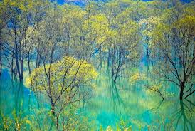 blue reflections wallpapers water trees reflections blue green forest landscape desktop