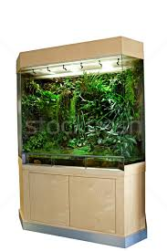 terrarium for tropical rainforest pets stock photo dirk ercken
