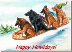 belgian sheepdog craigslist belgian sheepdog pictures dogs pinterest animals dog breeds