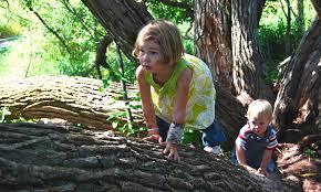 9 children u0027s books about trees delightful children u0027s books