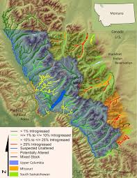 Glacier Park Map Map Of Genetic Status Of Westslope Cutthroat Trout Populations In