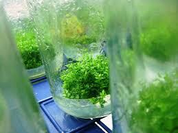 Aquascap Selecting The Types Of Plants For Aquascape Aquascaper