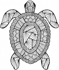 Detailed Coloring Pages Detailed Sea Turtle Advanced Coloring Page A To Z Teacher Stuff by Detailed Coloring Pages