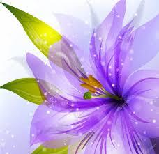 Portachere 100 Lily Flower 316 Best Lilies Images On Pinterest Flowers
