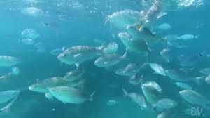 le ghiaie le ghiaie portoferraio i pesci