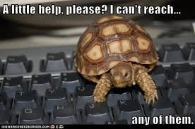 Typing Meme - i can has cheezburger typing page 2 funny animals online