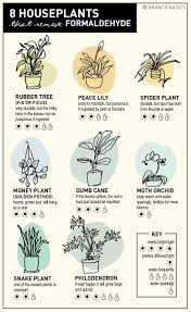 8 nasa approved houseplants that remove formaldehyde