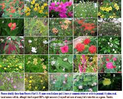 pictures of all flowers and names u2013 savingourboys info