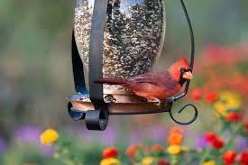 cardinal bird home decor benefits of attracting birds to your backyard