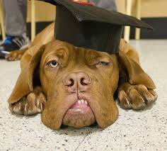 dog graduation cap and gown 15 dogs offering words of wisdom for graduation day