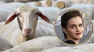 Schlafzimmerblick Bilder Verrückte Studie Schafe Erkennen Emmäh Watson Ratgeber Bild De