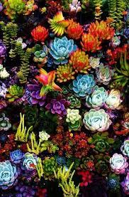 227 best gardening images on pinterest flowers flower gardening