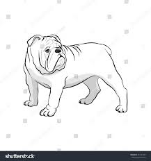 english bulldog french bulldog dog on stock vector 461261485