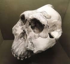 Floor Of The Cranium Oh 5 Wikipedia