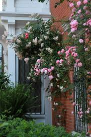 Trellis For Climbers The 7 Best Climbing Roses For Your Garden Gardenista