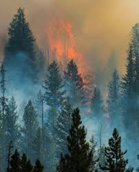 Wildfire Castle Rock Co by Beaver Creek Fire Wikipedia