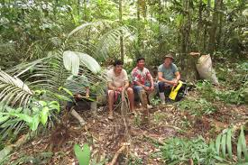 Under Canopy Rainforest by Peoples Shaped The Amazon Rainforest