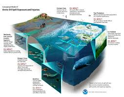 natural resource damage assessment noaa u0027s response and