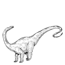 how to draw an apatosaurus