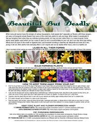 leave the lilies outside toxic plants and cut flowers the